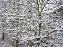 winter2i.jpg