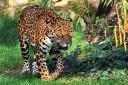 2014-10-30-jaguare.jpg